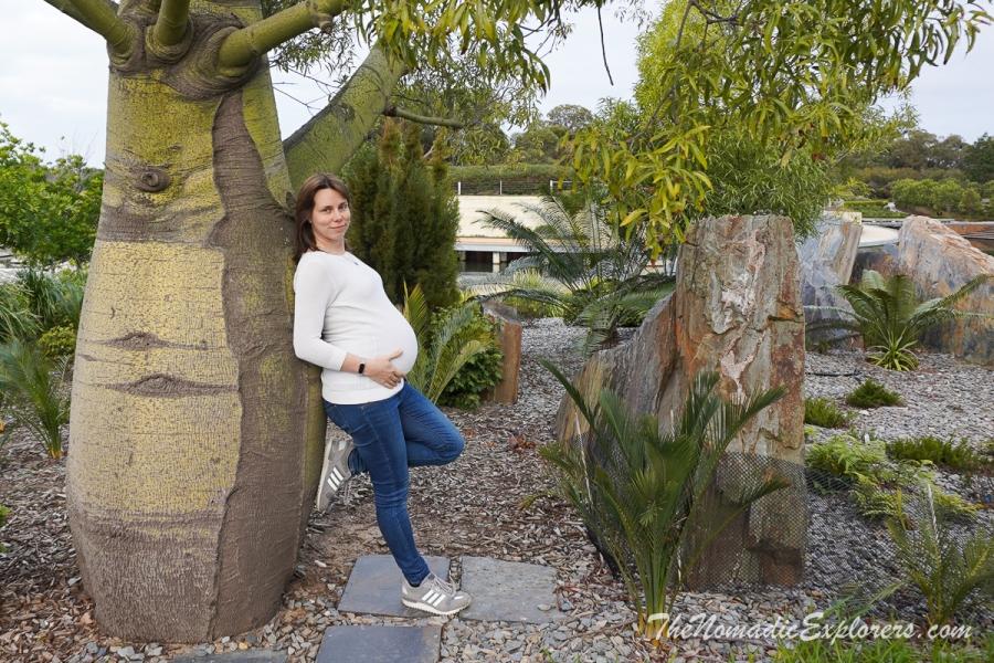 Australia, Ведение беременности в Австралии, ,