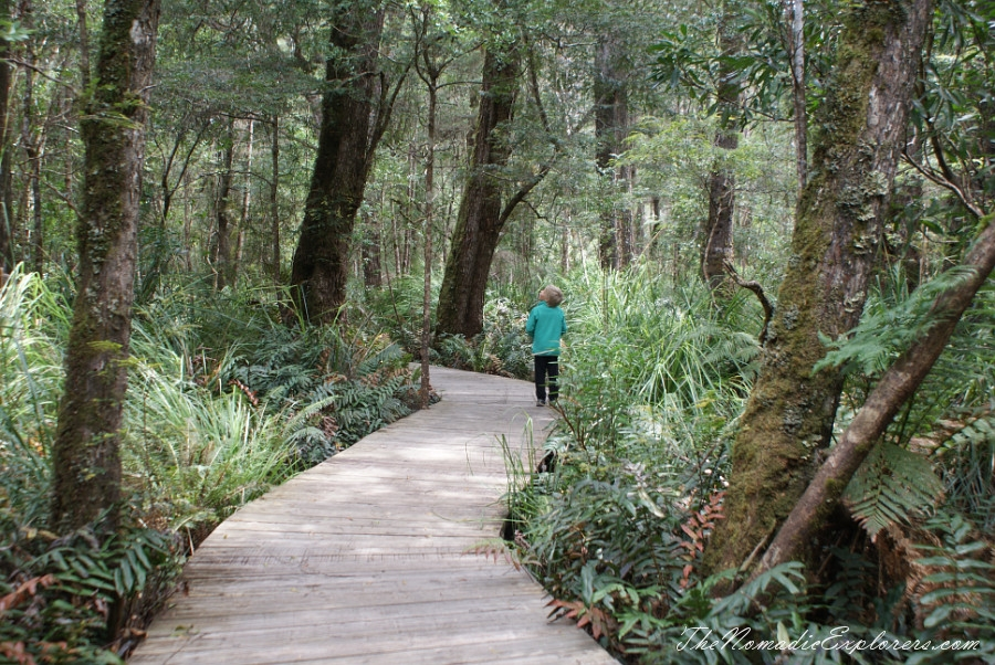 Australia, Tasmania, North West, Tasmania, Day 6. Tarkine Forest Adventure near Smithton, ,