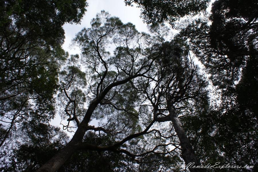 Australia, Tasmania, North West, Tasmania, Day 6. Tarkine Forest Adventure near Smithton, ,