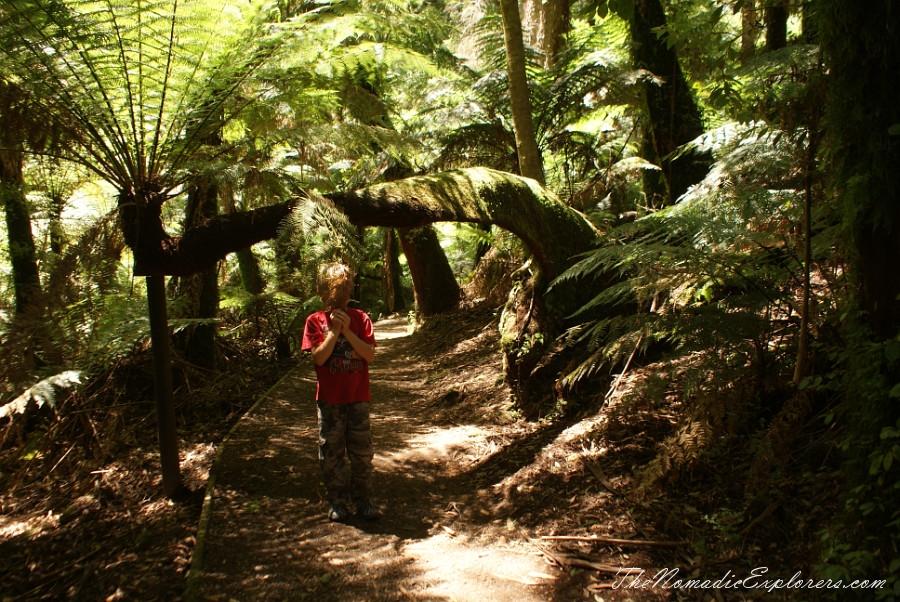 Australia, Victoria, Gippsland, A hidden gem of Gippsland -  Tarra Bulga National Park, ,