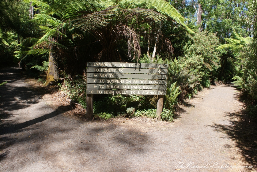 Australia, Victoria, Gippsland, A hidden gem of Gippsland -  Tarra Bulga National Park, ,