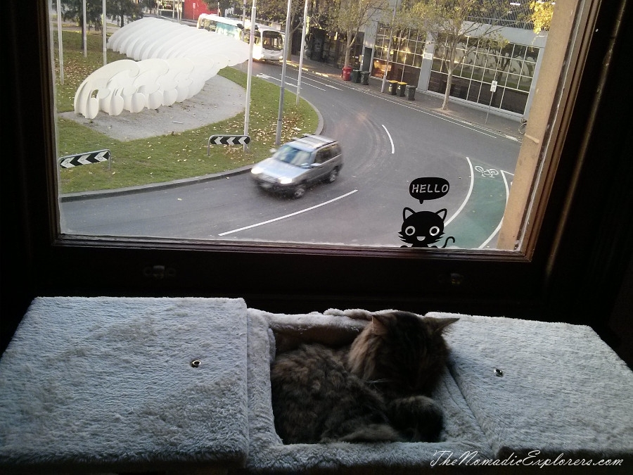 Australia, Victoria, Melbourne, Cat Cafe Melbourne, ,