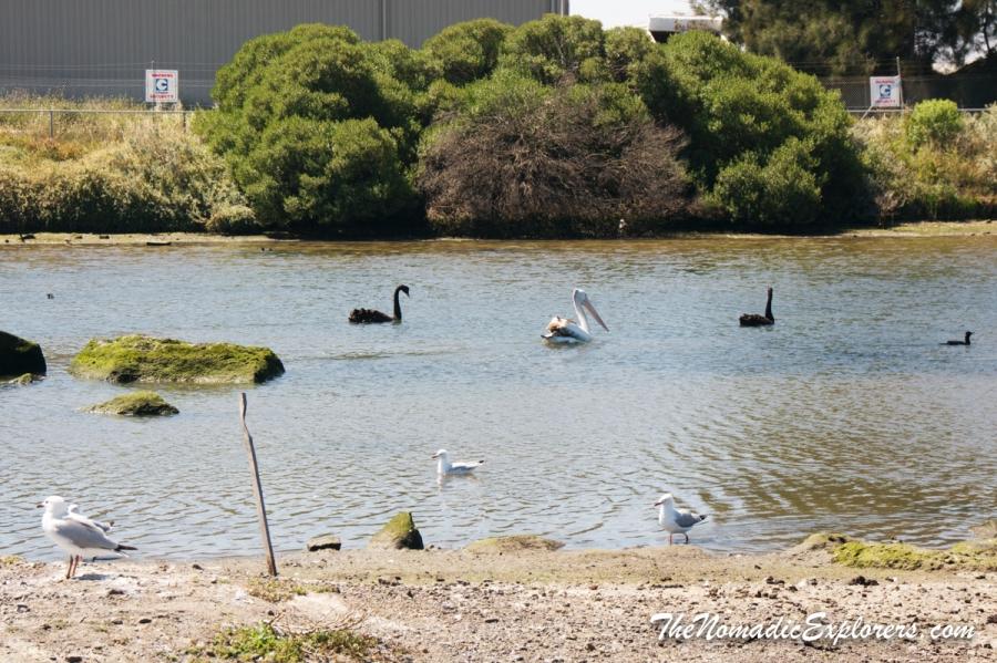 Australia, Victoria, Melbourne, Велопоездка вдоль побережья из Williamstown в Point Cook через Skeleton Creek, ,