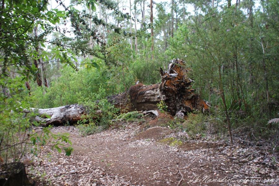 Гей-категория лес-австралия