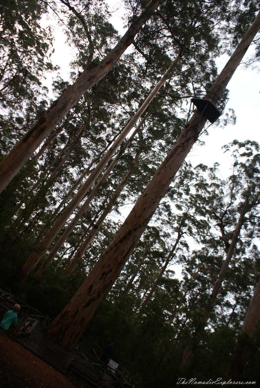 Australia, Western Australia, South West, Western Australia Trip. Day 7. Tall Timber Country / The Karri Forests Region, ,