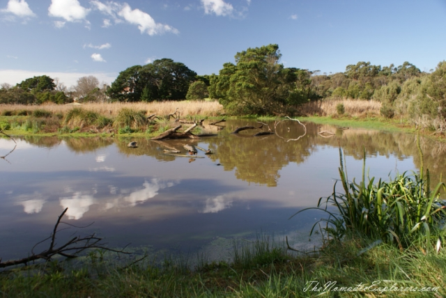 Australia, Victoria, Mornington Peninsula, Birdwatching at Coolart Wetlands and Homestead Reserve, ,