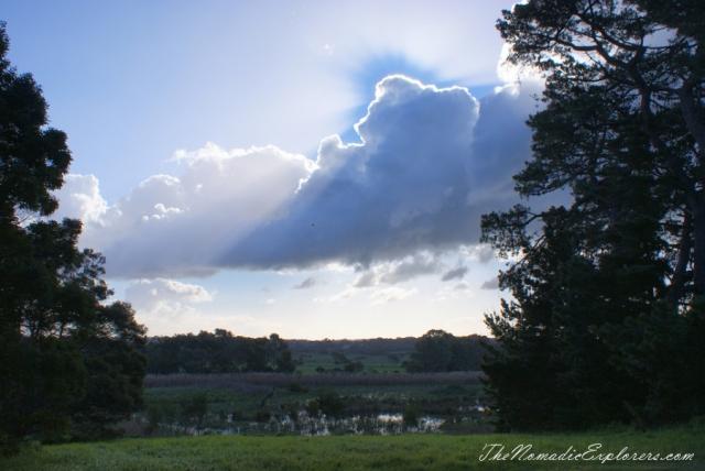 Australia, Victoria, Mornington Peninsula, Birdwatching at Coolart Wetlands and Homestead Reserve, ,