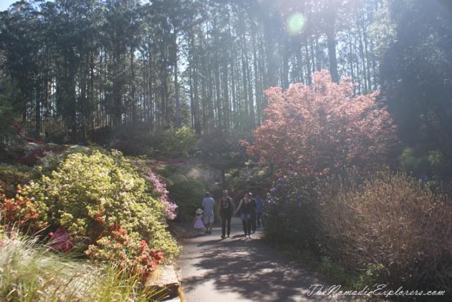Australia, Victoria, Yarra Valley & Dandenong Ranges, Looking for sakura in the National Rhododendron Gardens, Olinda, ,