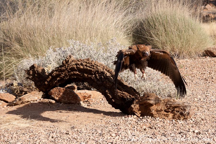 Australia, Northern Territory, Alice Springs and Surrounds, Из Дарвина в Аделаиду: День 4. Alice Springs Desert Park днем и ночью, ,