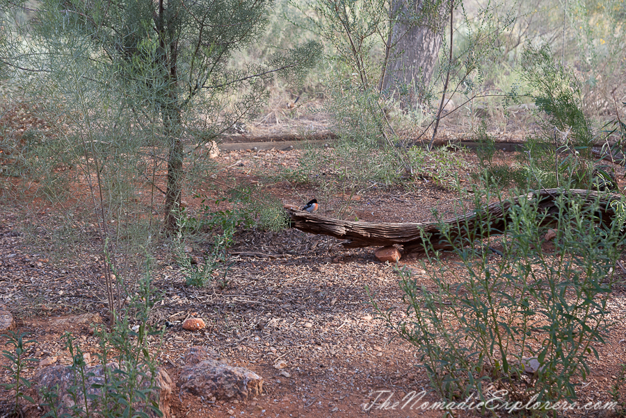 Australia, Northern Territory, Alice Springs and Surrounds, Из Дарвина в Аделаиду: День 4. Alice Springs Desert Park днем и ночью, ,