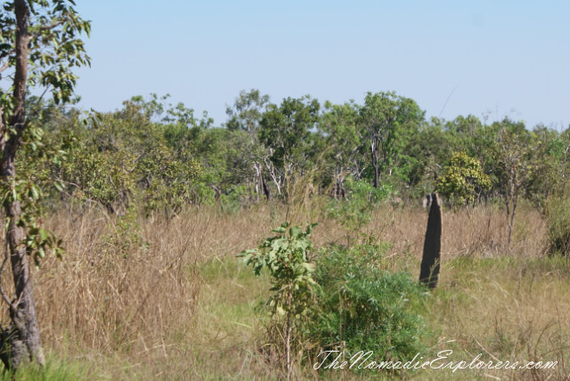 Australia, Northern Territory, Darwin and Surrounds, Litchfield National Park. The Termite Mounds., ,