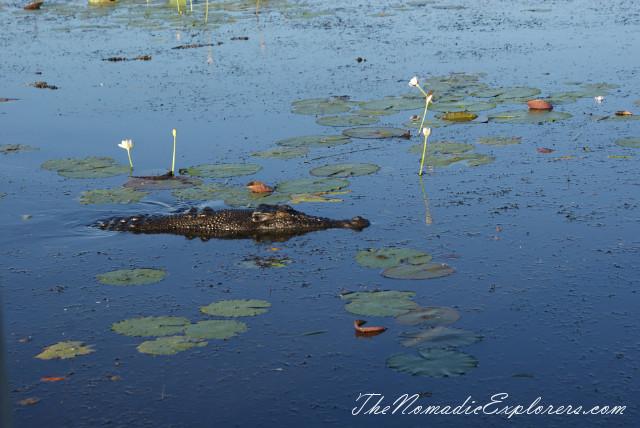 Australia, Northern Territory, Kakadu and Surrounds, Kakadu National Park. Yellow Water Billabong Cruise , ,