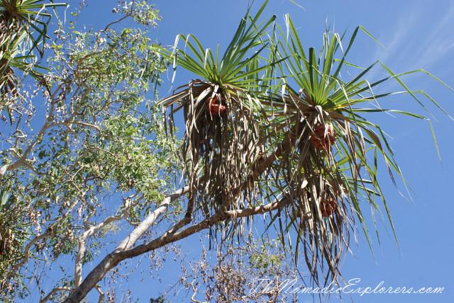 Australia, Northern Territory, Kakadu and Surrounds, Kakadu National Park. Mamukala Wetlands, ,