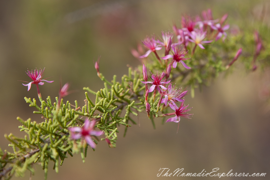 Australia, Northern Territory, Katherine and Surrounds, Из Дарвина в Аделаиду: День 1. Дарвин - Pine Creek - Edith Falls, ,
