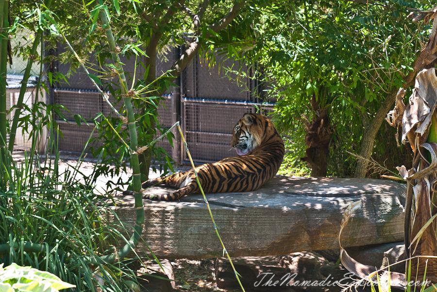 Adelaide Zoo The Nomadic Explorers Australian Travel Blog
