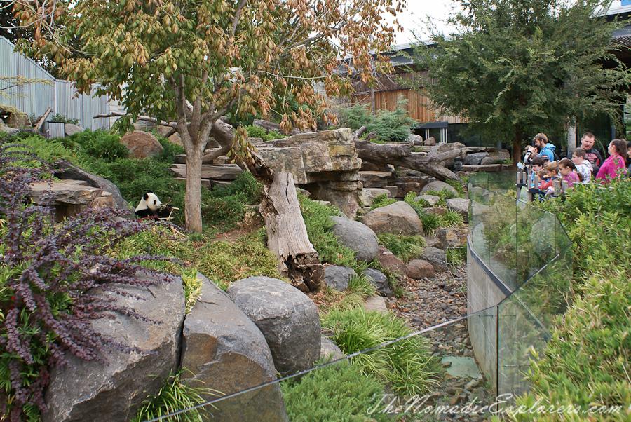 Australia, South Australia, Adelaide City, Adelaide Zoo, ,