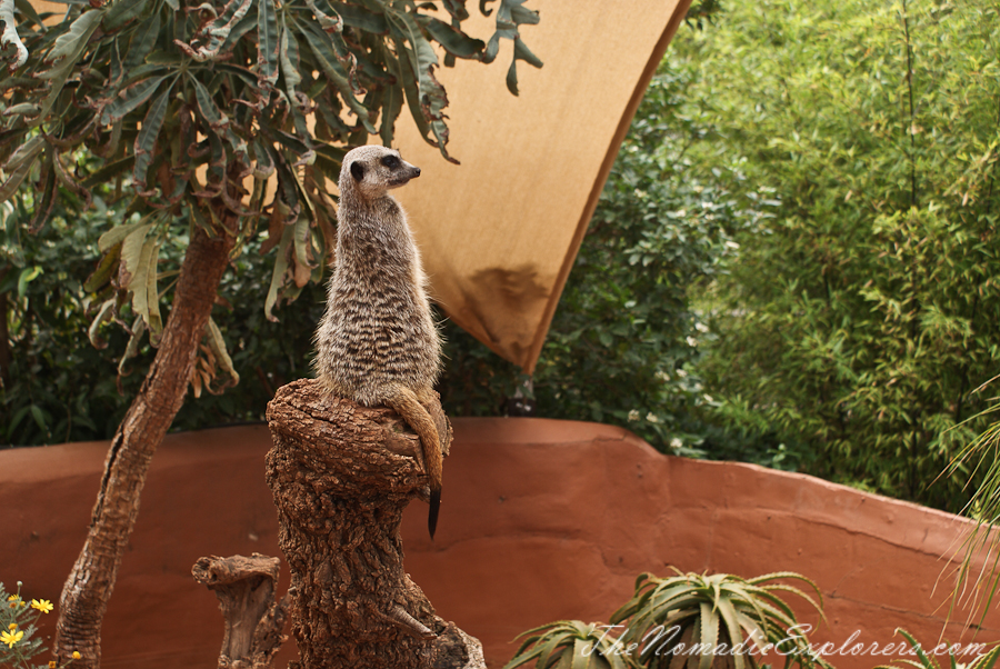 Australia, South Australia, Adelaide City, Adelaide Zoo, ,