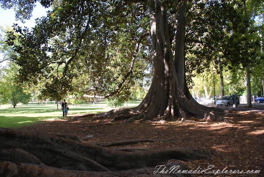 Australia, South Australia, Adelaide City, Adelaide Botanic Garden, ,