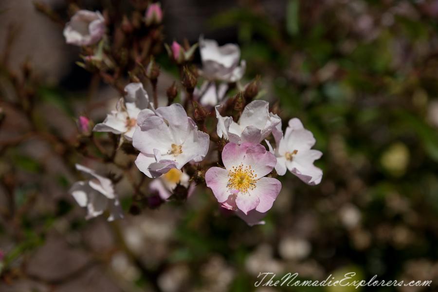 Australia, South Australia, Adelaide Hills, Mount Lofty Botanic Garden - Something for every season!, ,