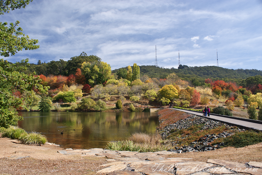 Mount lofty botanic garden something for every season for Adelaide hills landscape