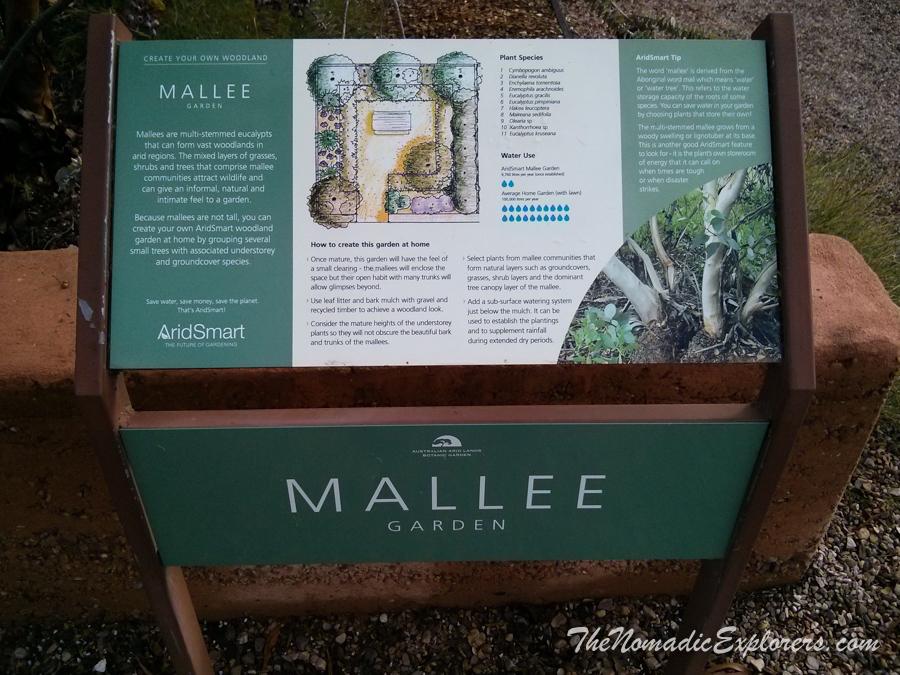 Australia, South Australia, Flinders Ranges and Outback, Из Дарвина в Аделаиду. День 10. Australian Arid Lands Botanic Garden в Port Augusta, ,