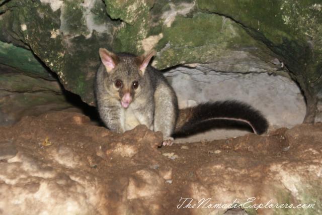 "Australia, South Australia, Limestone Coast, Полдня в Mt Gambier - ""The Lady Nelson"" Visitor&Discovery Centre, Umpherston Sinkhole, Cave Garden, ,"