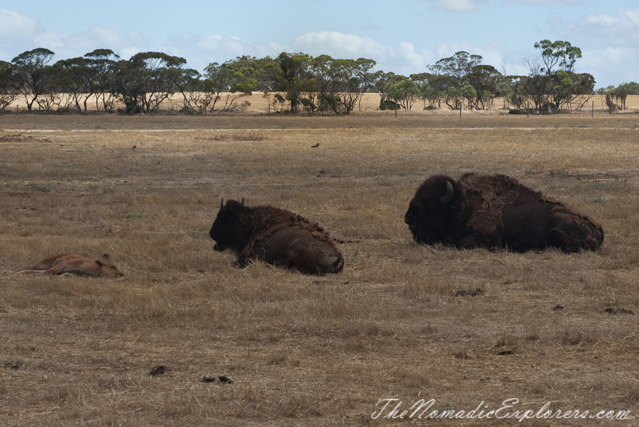 Australia, South Australia, Murray River, Lakes and Coorong, Monarto Zoo - Australian Safari Experience, ,