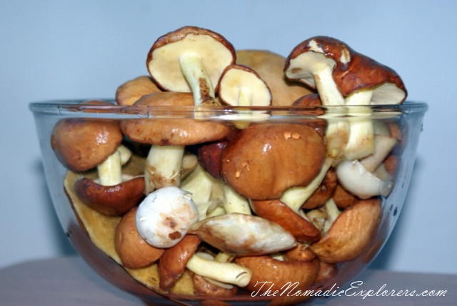 Australia, Victoria, Daylesford & the Macedon Ranges, Mushroom Picking near Mount Macedon, ,
