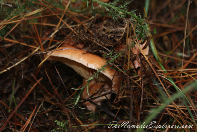 Australia, Victoria, Daylesford & the Macedon Ranges, Mushroom Picking near Mount Macedon, ,