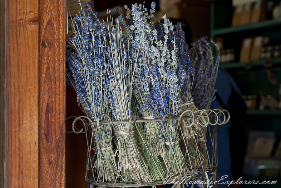 Australia, Victoria, Daylesford & the Macedon Ranges, Lavender Harvest Festival at Lavandula Swiss Italian Farm, ,