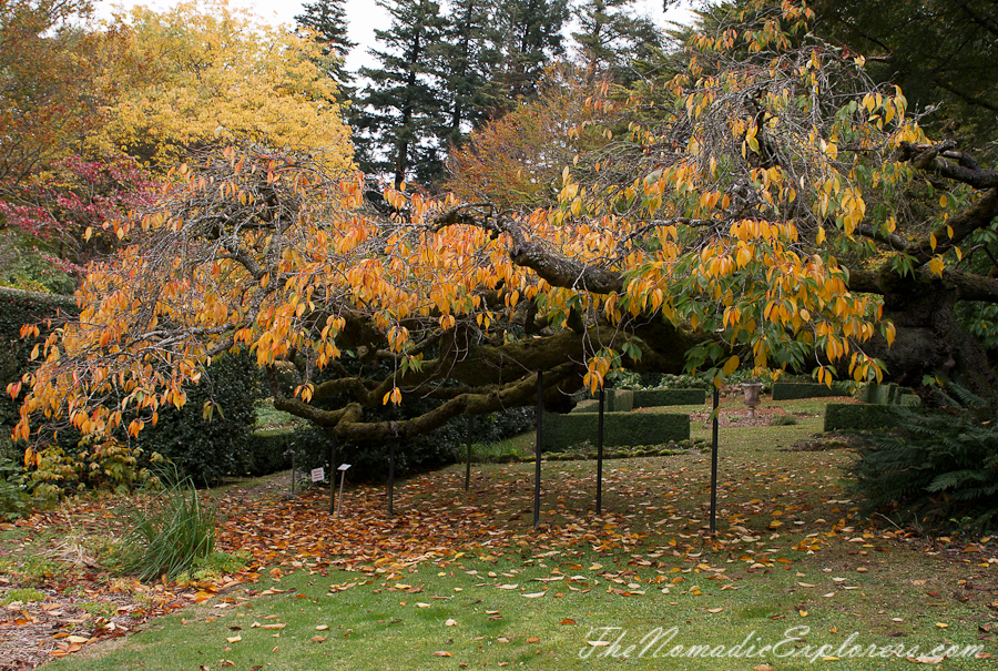 Australia, Victoria, Daylesford & the Macedon Ranges, Autumn in the Macedon Ranges - Duneira Estate, ,