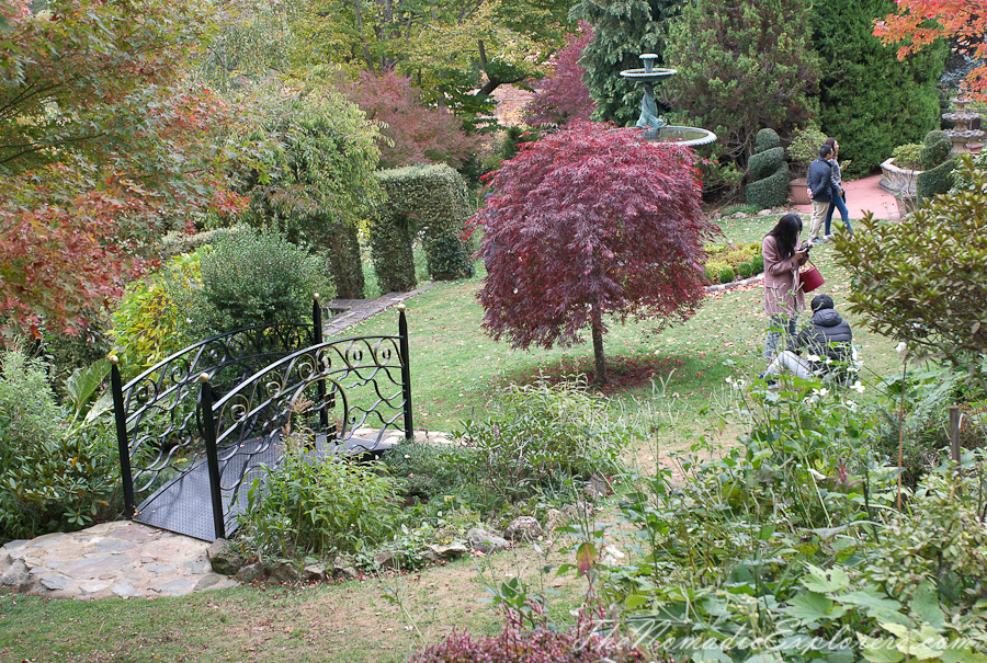 Australia, Victoria, Daylesford & the Macedon Ranges, Mount Macedon: Forest Glade Gardens, ,
