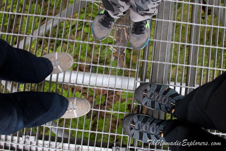 Australia, Victoria, Great Ocean Road, Выходной в Otways: прогулка в Otway Fly Treetop Adventures, ,