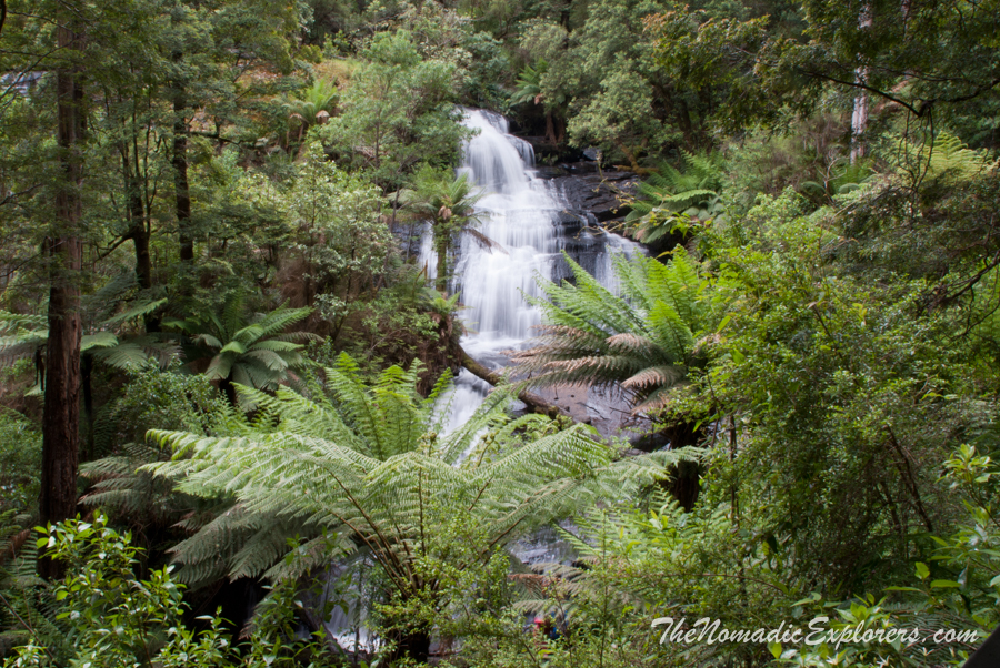 Australia, Victoria, Great Ocean Road, Apollo Bay, Colac, Выходной в Otways: Triplet Falls, Hopetoun Falls, Californian Redwoods, ,