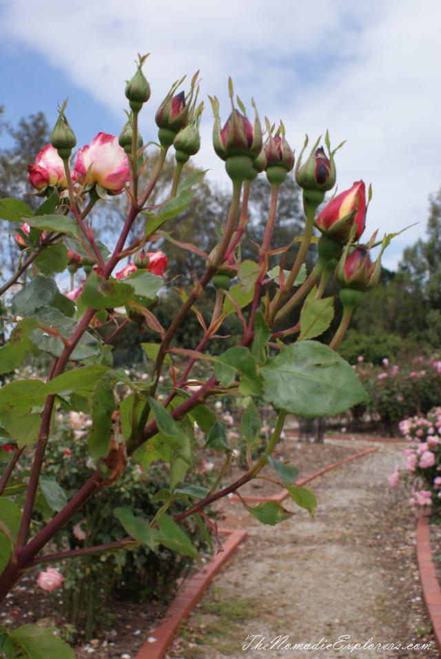 Australia, Victoria, Melbourne, Сад роз в Мельбурне - Victoria State Rose Garden, ,