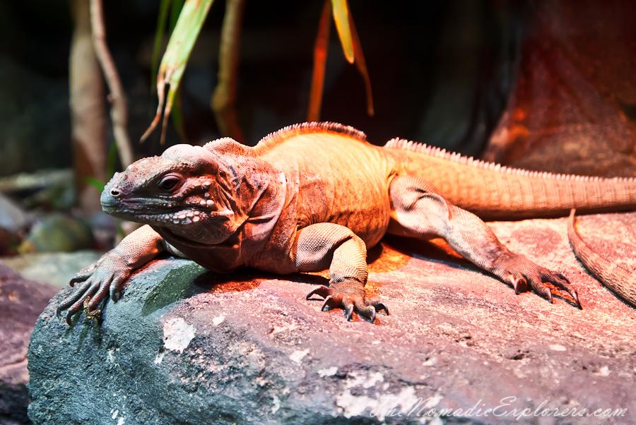 Australia, Victoria, Melbourne, A day in Melbourne Zoo, ,