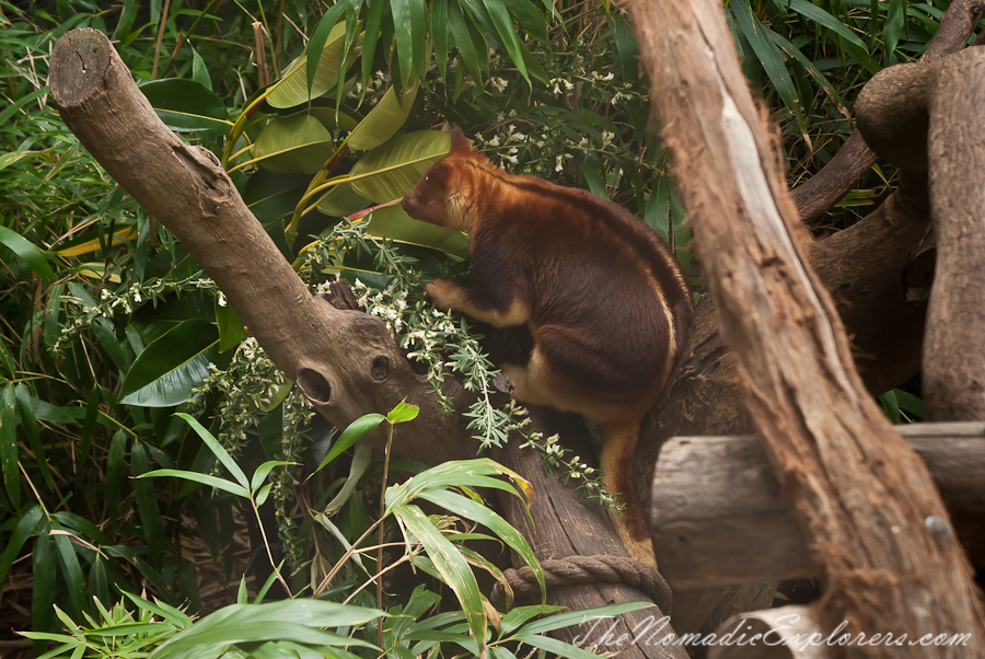 Australia, Victoria, Melbourne, A day in Melbourne Zoo, ,