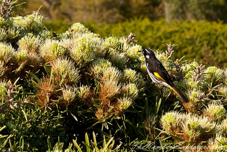 Australia, Victoria, Melbourne, Royal Botanic Gardens Victoria: Cranbourne Gardens, ,