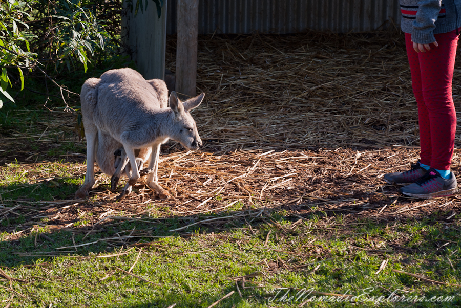Australia, Victoria, Phillip Island, A day trip to the Phillip Island Wildlife Park, ,