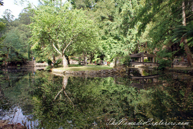 Australia, Victoria, Yarra Valley & Dandenong Ranges, Looking for autumn. Alfred Nicholas Gardens (Burnham Beeches Estate), ,