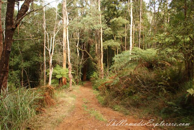Australia, Victoria, Yarra Valley & Dandenong Ranges, Looking for autumn. R J Hamer Arboretum, ,