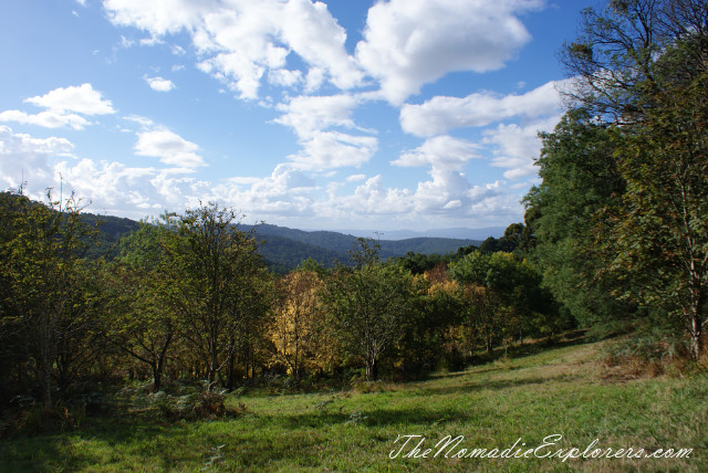 Australia, Victoria, Yarra Valley & Dandenong Ranges, Looking for autumn. R J Hamer Arboretum, ,