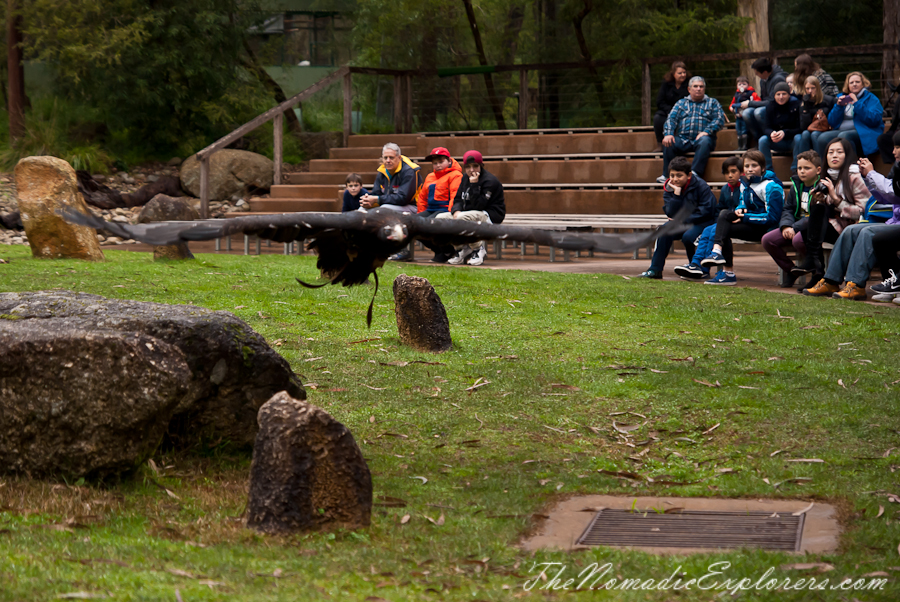 Australia, Victoria, Yarra Valley & Dandenong Ranges, Healesville Sanctuary: Explore a bushland haven for Australian wildlife, ,