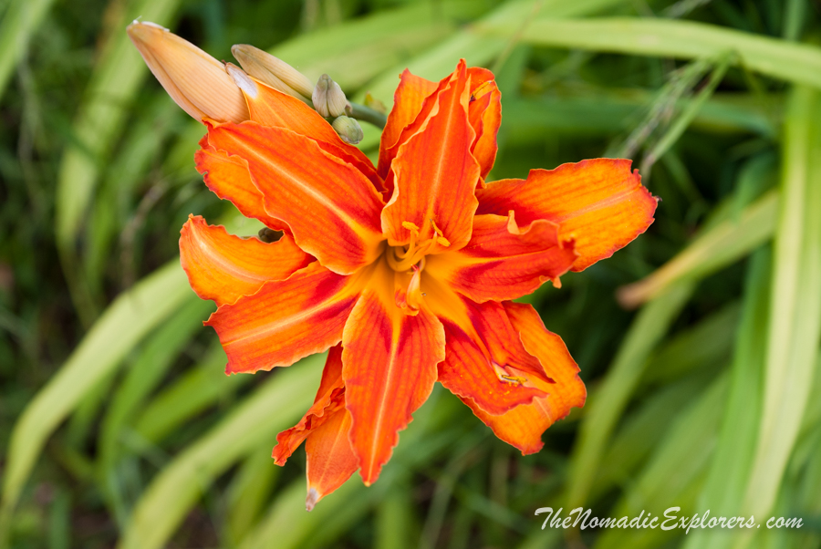 Australia, Victoria, Yarra Valley & Dandenong Ranges, Лето в Dandenong Ranges Botanic Garden, ,