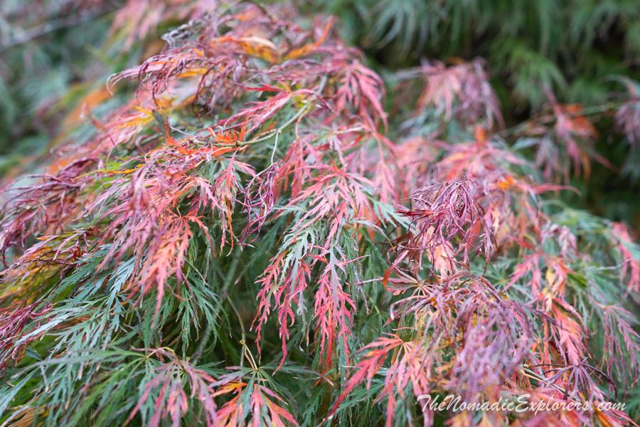 Australia, Victoria, Yarra Valley & Dandenong Ranges, Осень в George Tindale Memorial Gardens, ,
