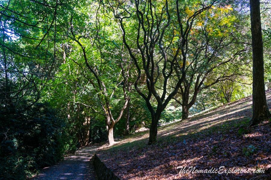 Australia, Victoria, Yarra Valley & Dandenong Ranges, Кусочек осени в Pirianda Garden, ,